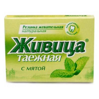 Sibiřská žvýkací pryskyřice s mátou 5 ks