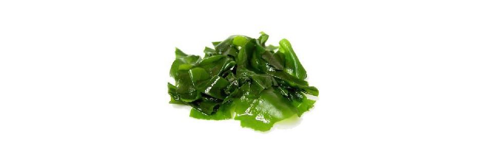 Zelené potraviny - řasy, pšenice, ječmen