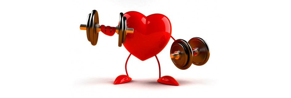 Srdce&cévy